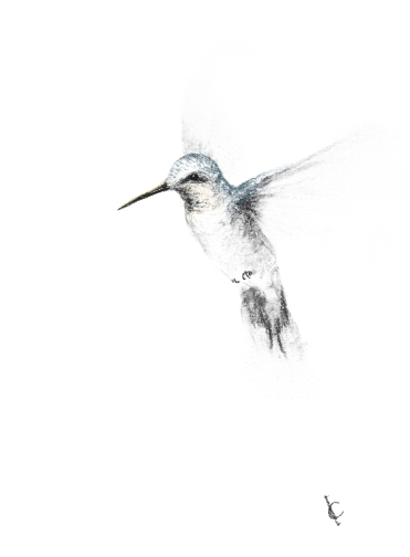 hummingbird10_imaginefreedomart.com_